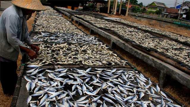 Ilustrasi. Aktivitas Nelayan Pengasinan Ikan di  desa pesisir Pelabuhan Perikanan Karangantu Serang Banten. (Foto: Dok/Net)